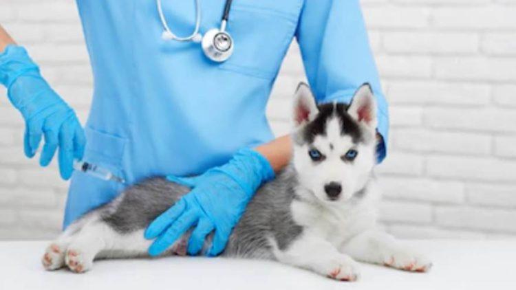 ¿Cuándo debo vacunar a mi mascota con la antirrábica?