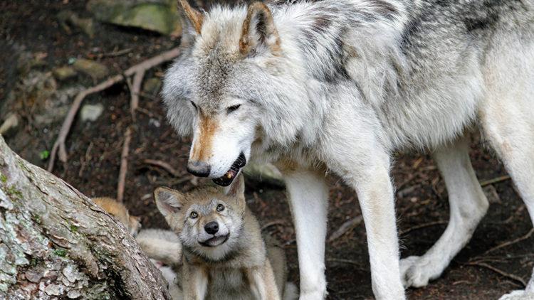 Los 5 mejores padres del reino animal