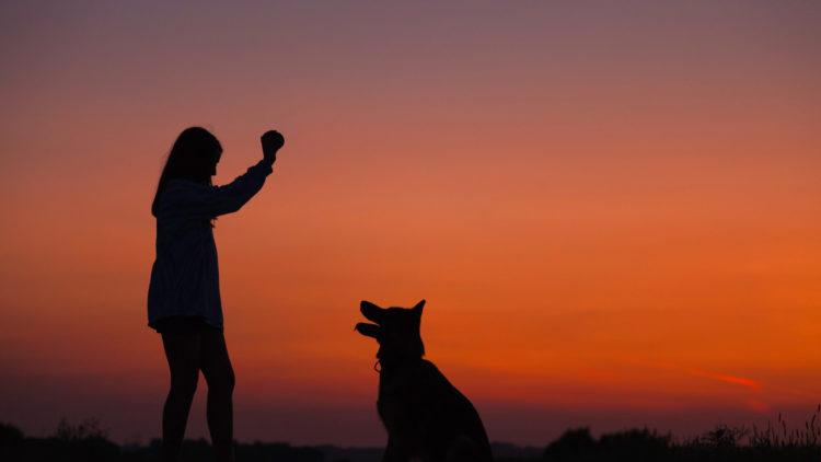 Educar a tu perro:  4 consejos fundamentales que no debes olvidar