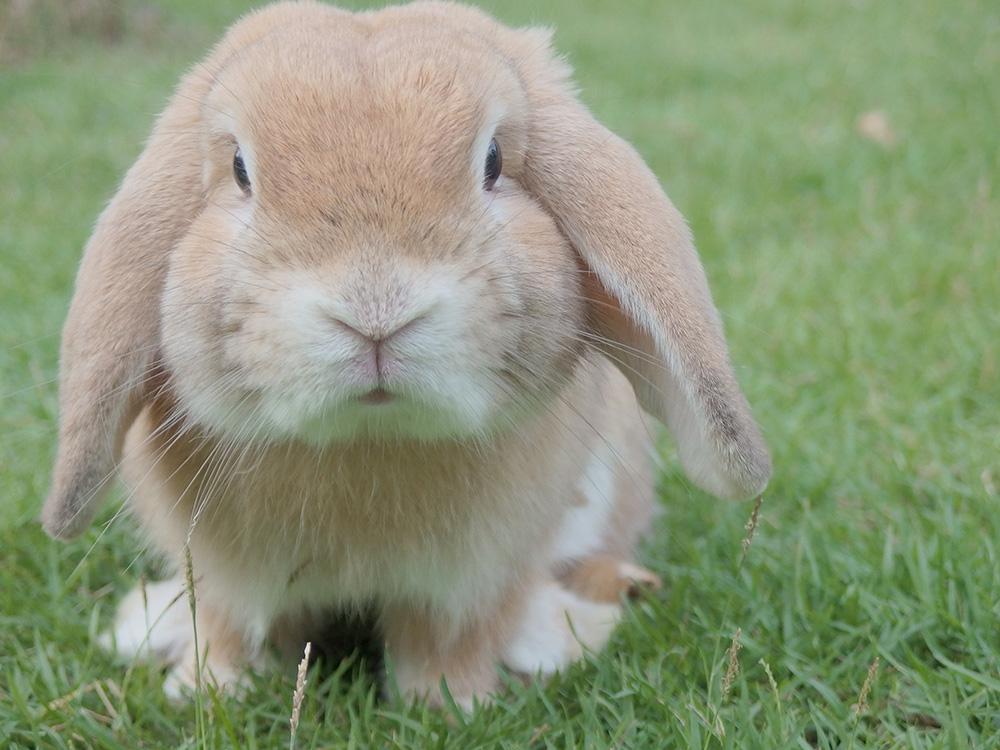 Enfermedades en conejos