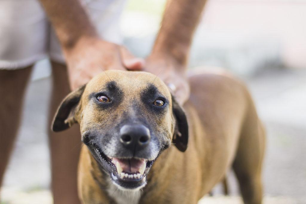 los perros no confian en las malas personas