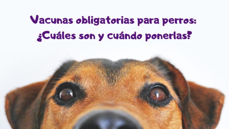 Vacunas obligatorias para perros: ¿Cuáles son y cuándo ponerlas?
