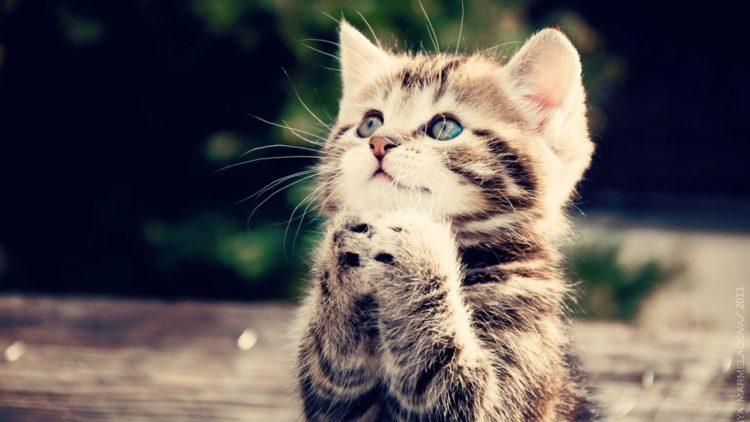 Diez curiosidades de los gatos que quizás no sabías
