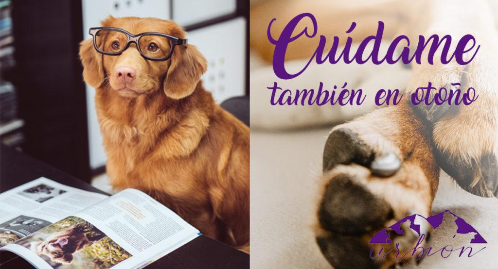 Cuidados de las mascotas en otoño