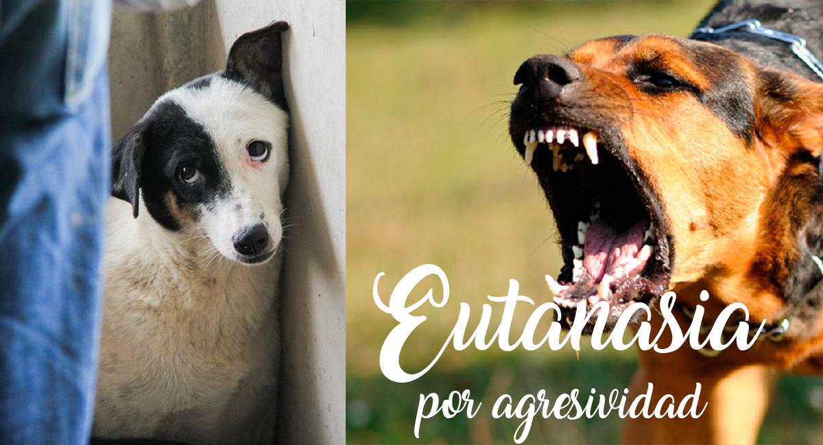 Eutanasia Por Agresividad Es Realmente Necesaria Clínica Veterinaria En Soria