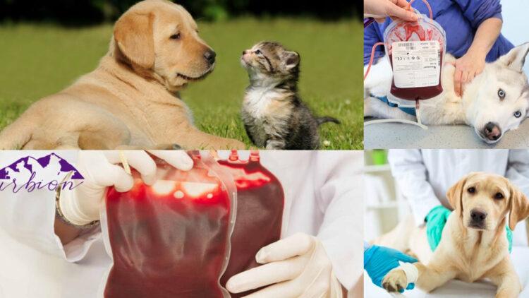 Las transfusiones de sangre: requisitos y beneficios para tu mascota