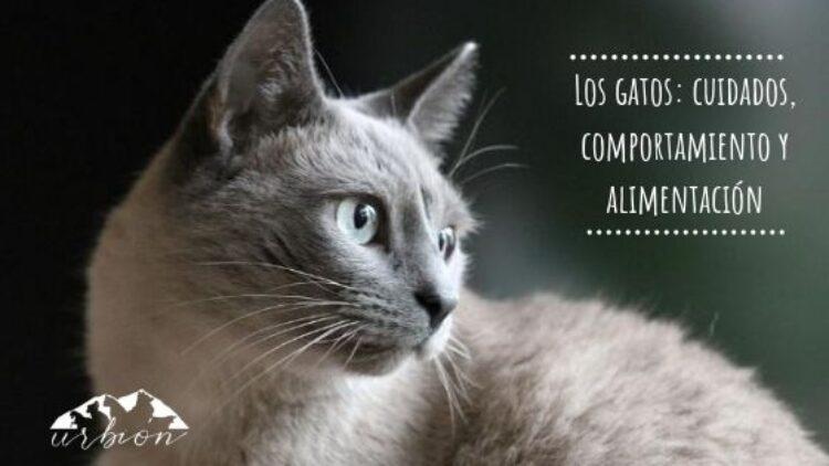 Los gatos: cuidados, comportamiento y alimentación