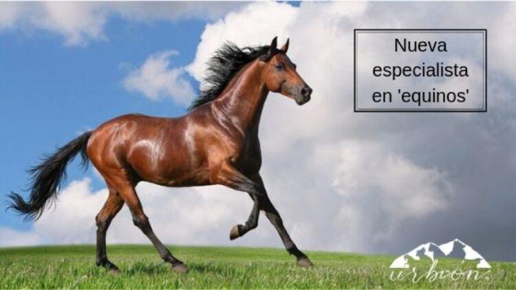 Nueva especialista veterinaria en 'equinos': Cristina Rioja