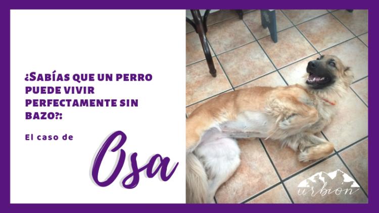 ¿Sabías que un perro puede vivir perfectamente sin bazo?: El Caso de Osa