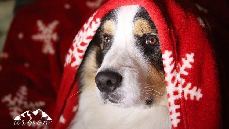"""En Navidad, no """"compres""""… ¡Adopta!"""