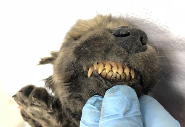 dientes-perro-congelado.jpg