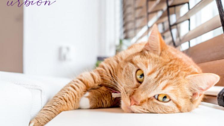 Nuestros gatos se estresan: Aumentan los casos de cistitis durante el confinamiento
