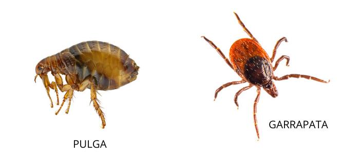 pulgas y garrapatas en primavera