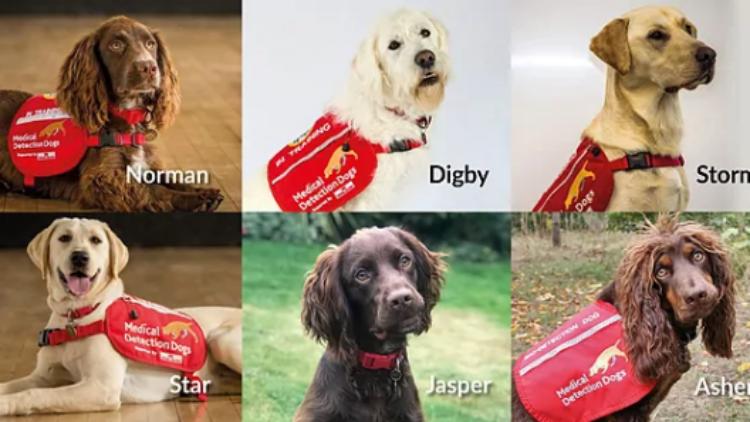 Los Superseis: el equipo canino que participará en la detección del Coronavirus