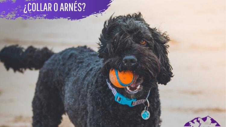 ¿Collar o arnés? ¿Qué es mejor para pasear a nuestra mascota?