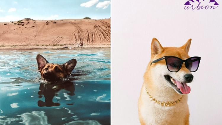 6 consejos para refrescar a tus mascotas en verano