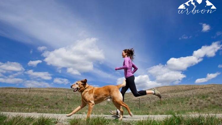 ¿Tiene relación el cansancio en mascotas con las enfermedades cardiacas?