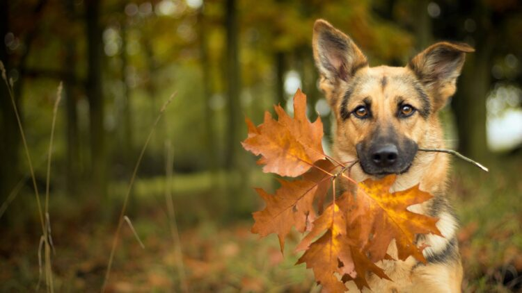 5 consejos para cuidar a nuestras mascotas en otoño