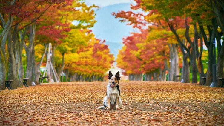 Enfermedades de otoño que pueden afectar a nuestras mascotas