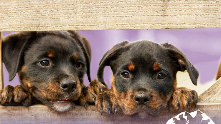 Las vacunas que debemos poner a nuestros perros para que estén protegidos